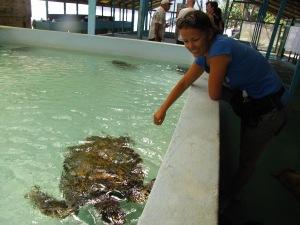 skildpaddereservat, Industry Bay